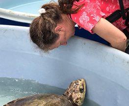 Erika Nowak with sea turtle