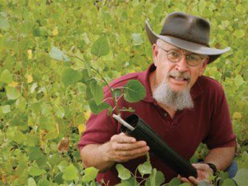 Tom Whitham with cottonwood cutting