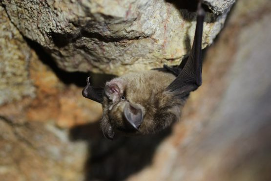 photo of small bat, highlighting diverse life forms found underground